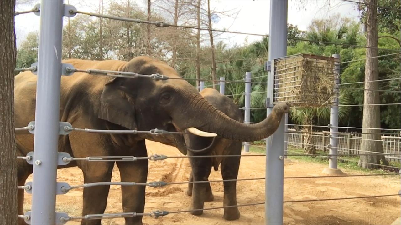 La Primera Visita Al Zoológico Del Libro A La Vida Real